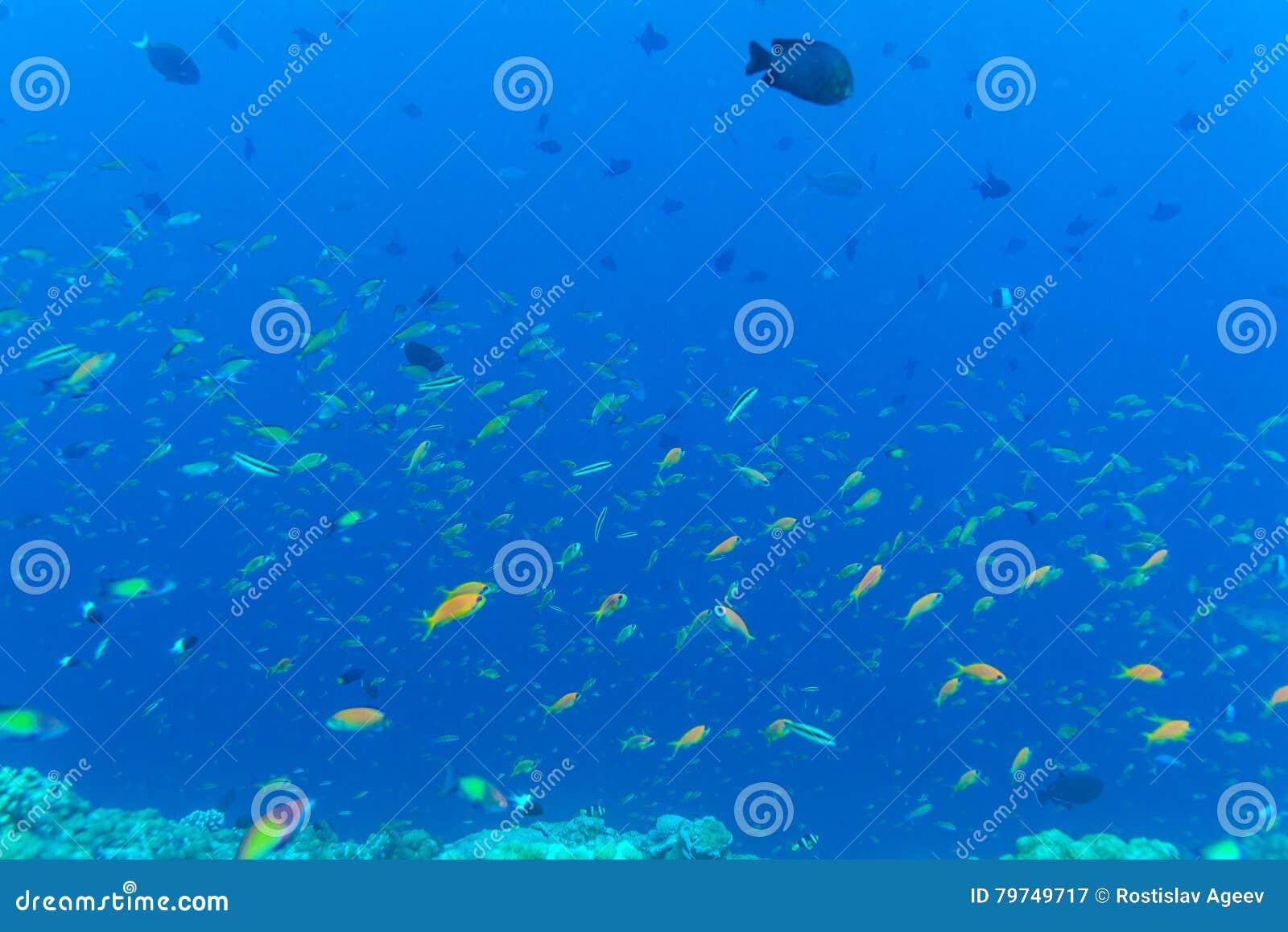 Muchos diversos pescados coloridos en fondo del azul de océano