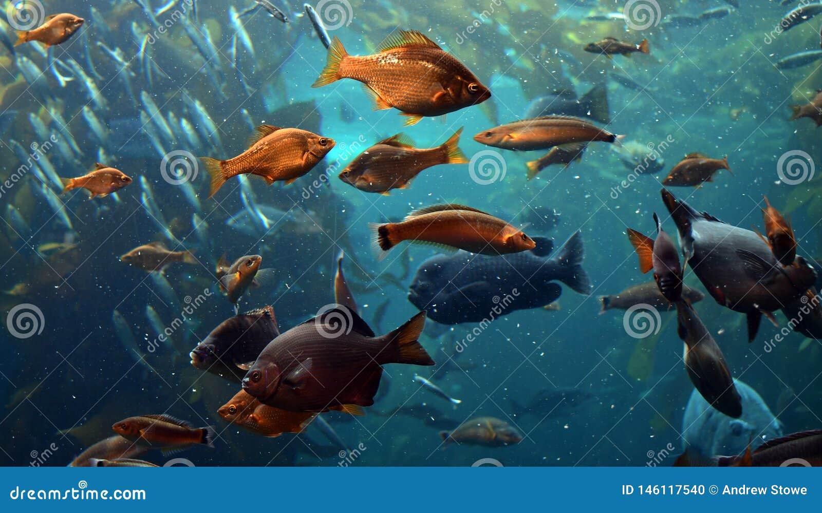 Muchos pescados en el océano
