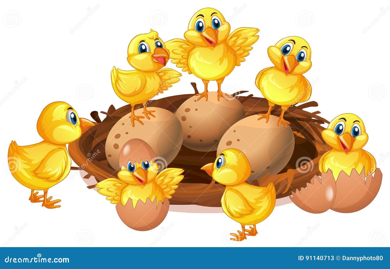 Muchos polluelos y huevos en jerarquía