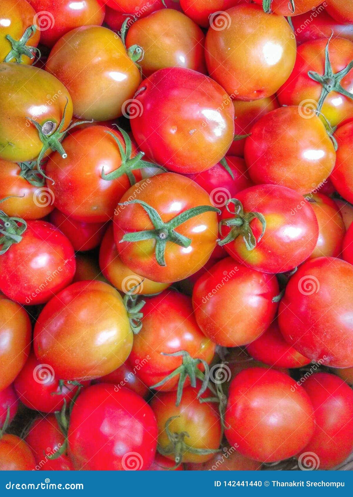 Muchos tomates maduros rojos brillantes en una cesta