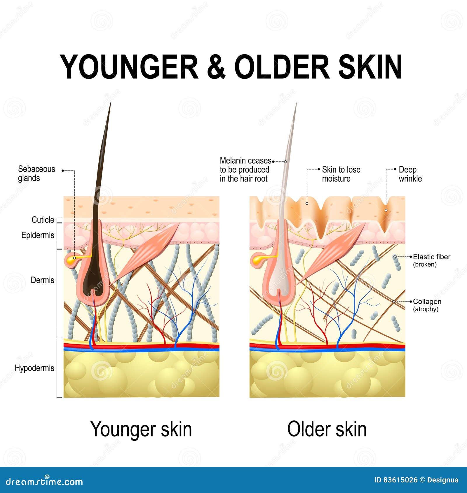 Mudanças de pele ou pele do envelhecimento