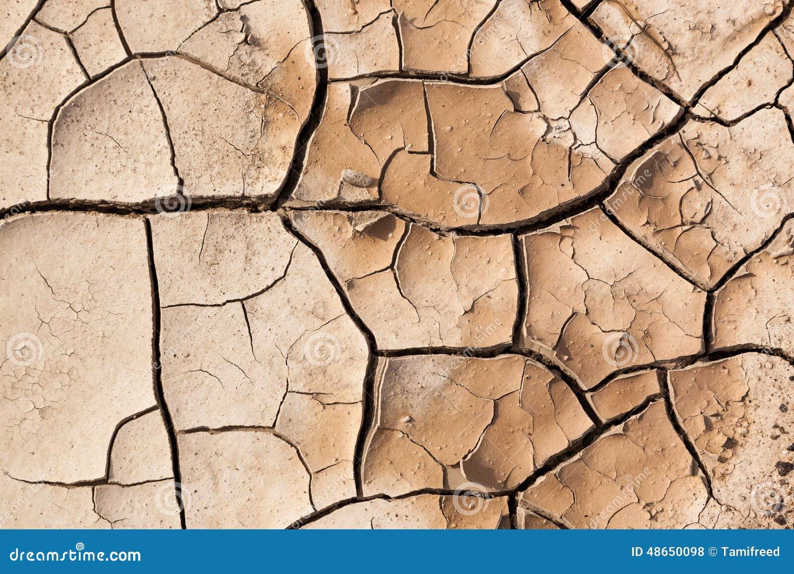 Muddy Cracked Earth