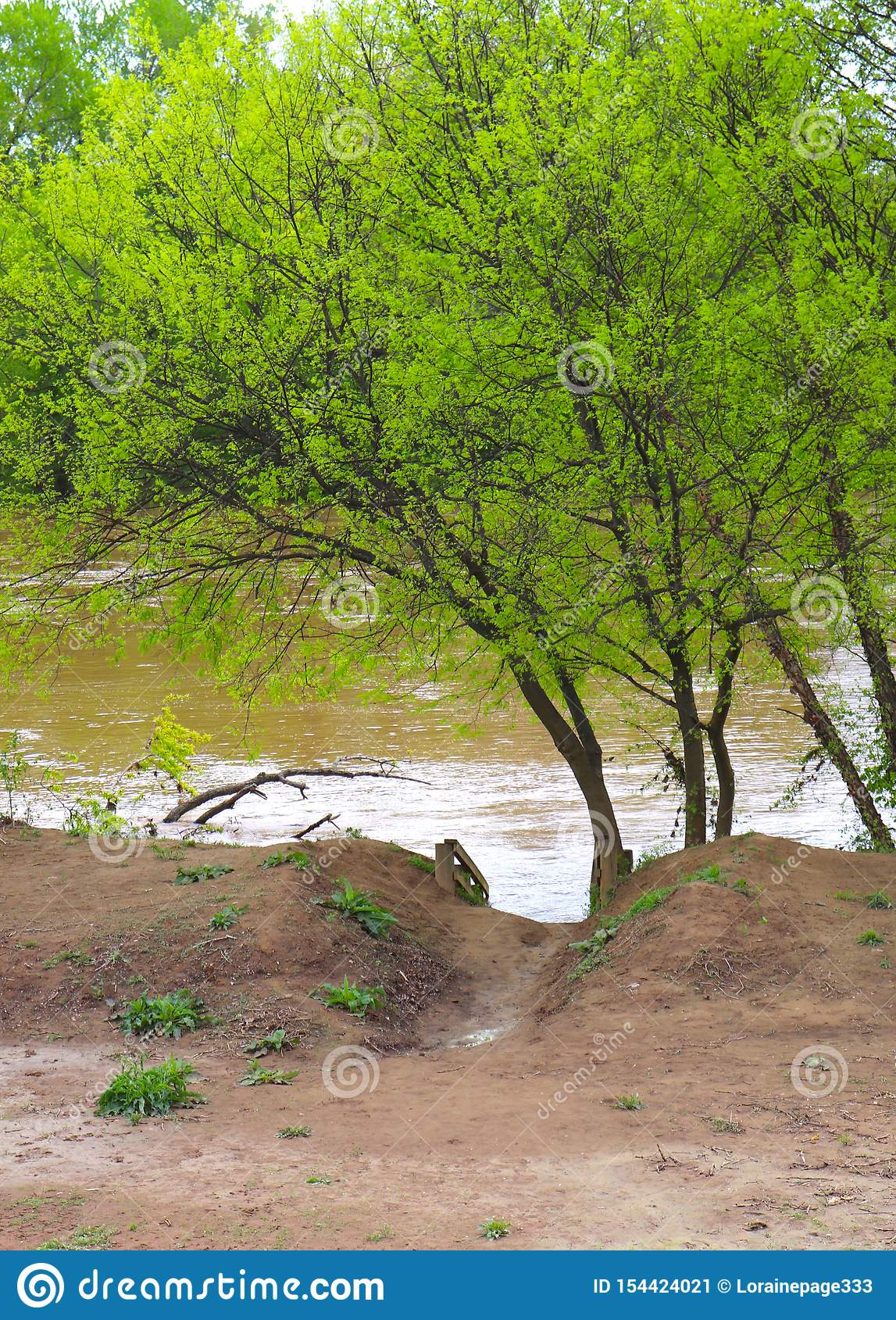 Muddy Pathway to River With Overseen by Bright Green Leafed Tree