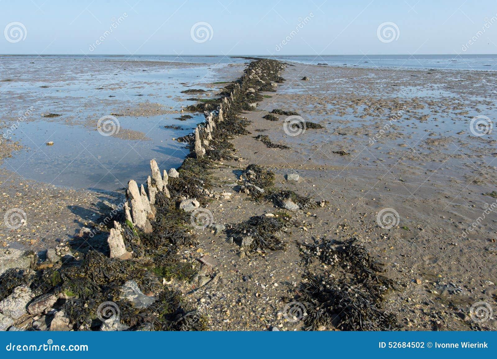 Mudflat en mer néerlandaise