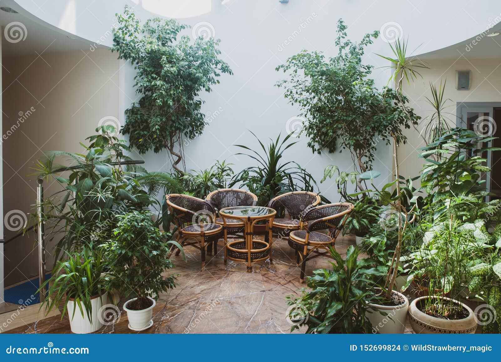 Muebles de la rota rodeados por las plantas verdes en un pasillo espacioso