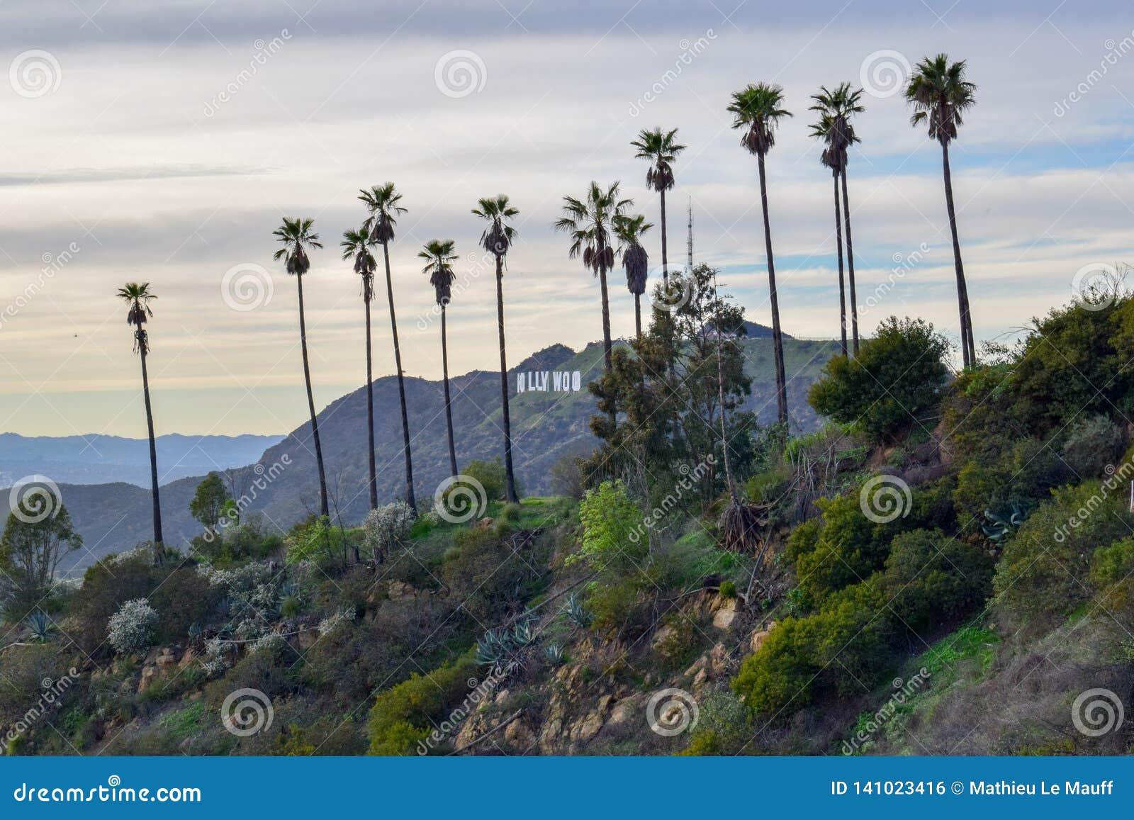 Muestra de Hollywood rodeada con las palmeras en el soporte Hollywood en la puesta del sol