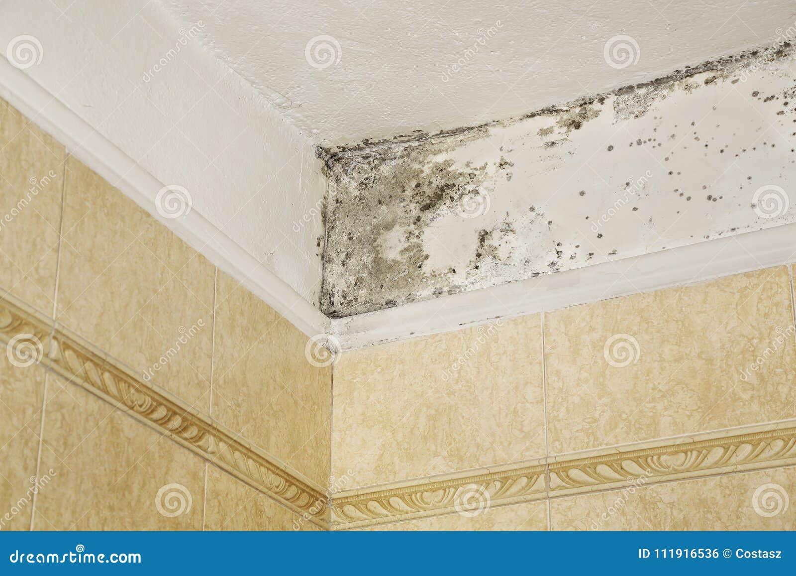 Muffa in bagno fotografia stock. Immagine di igiene - 111916536