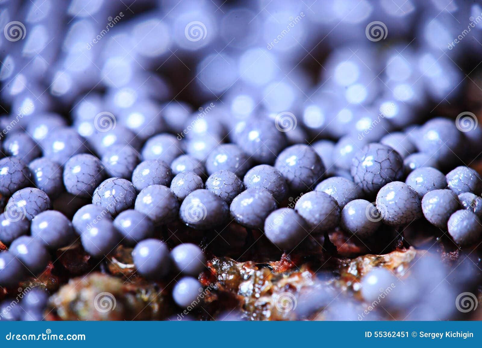 Muffa del fungo del microrganismo