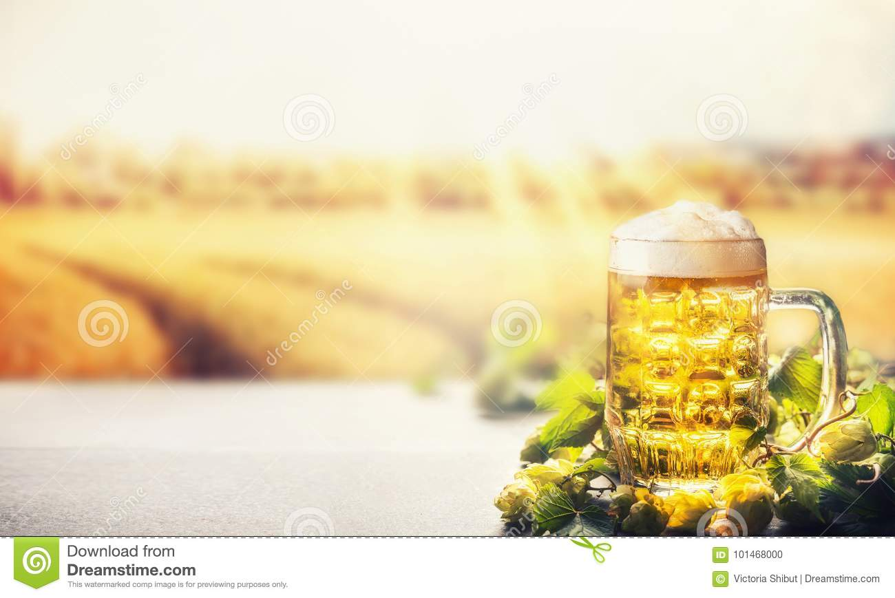 Mug of beer with foam on table with hops at field nature background with sunbeam, front view