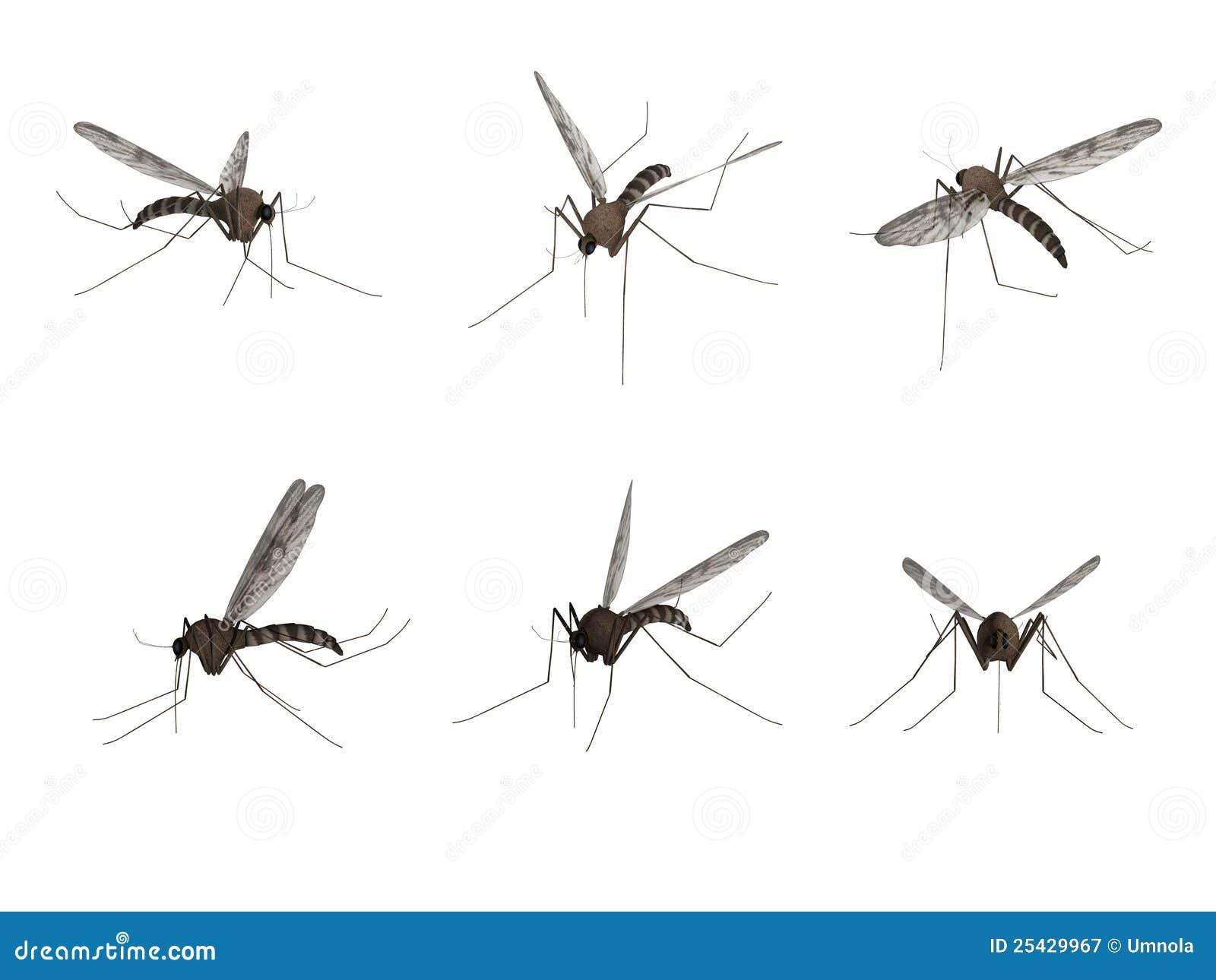 Mug, die op witte achtergrond wordt geïsoleerdo