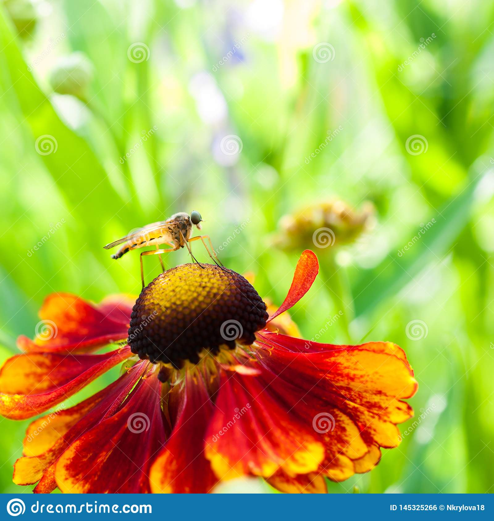 Mug op oranje bloem