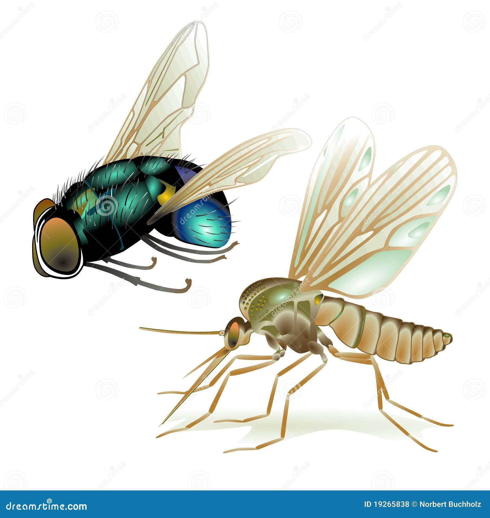 Muggen en vliegen