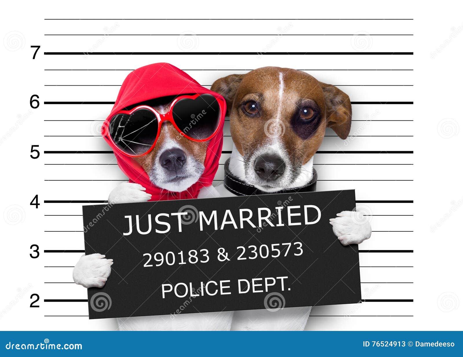 Mugshot enkel gehuwd honden