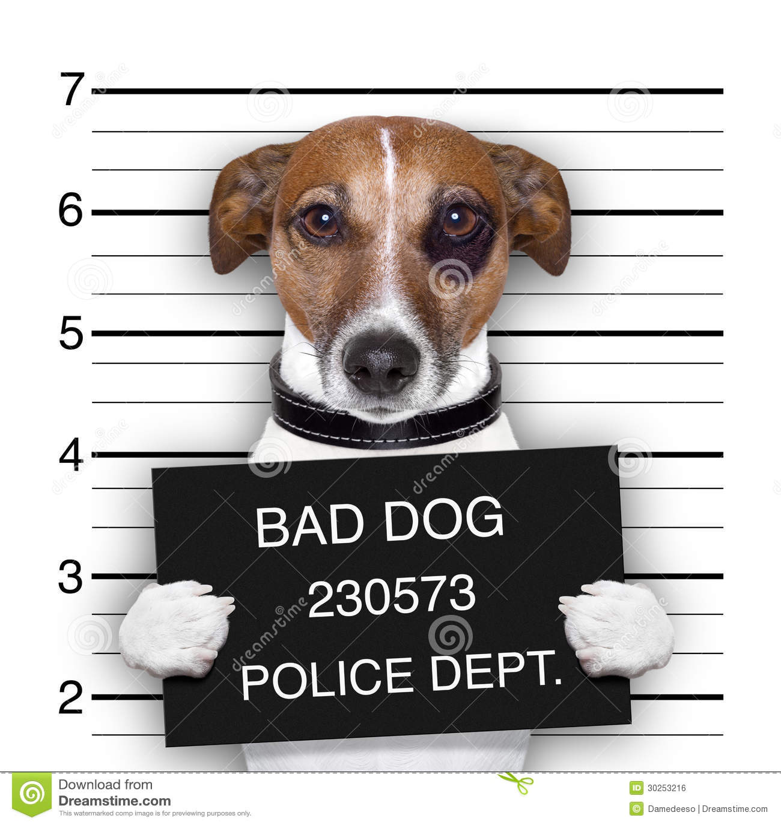 Mugshot Dog Royalty Free Stock Image Image 30253216
