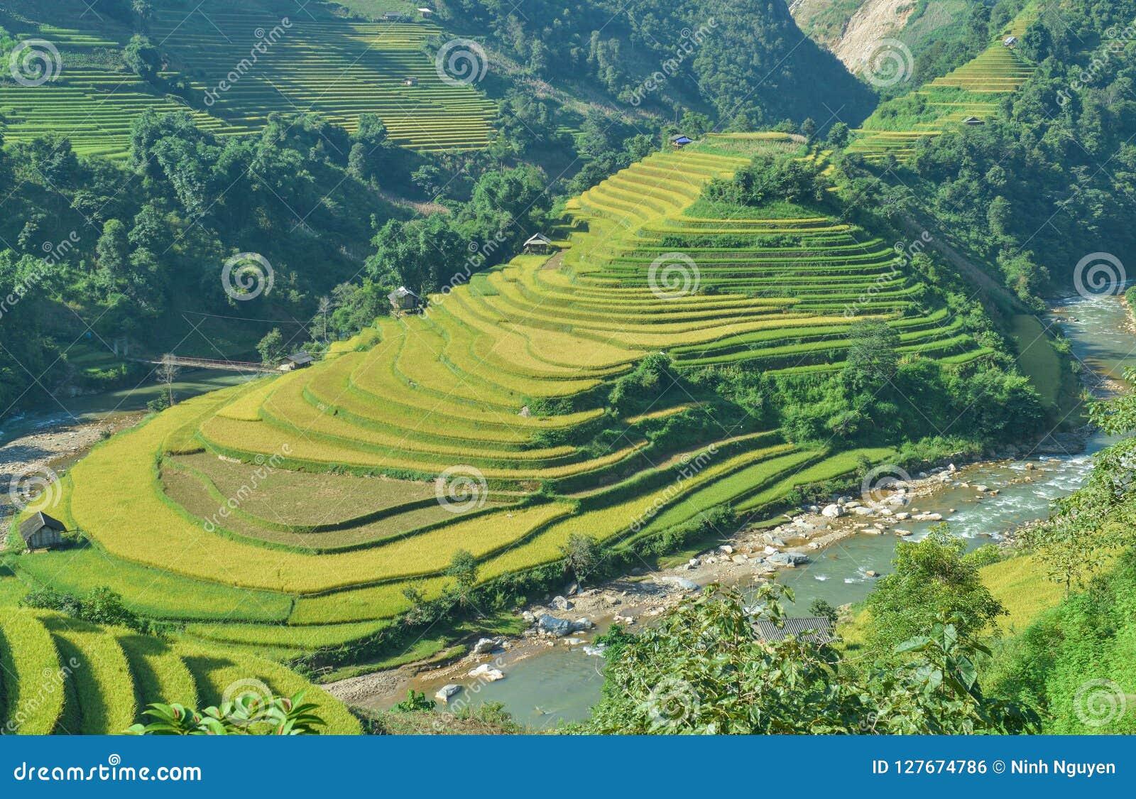 Mui Giay斑点和H ` Mong种族人民的露台的米领域
