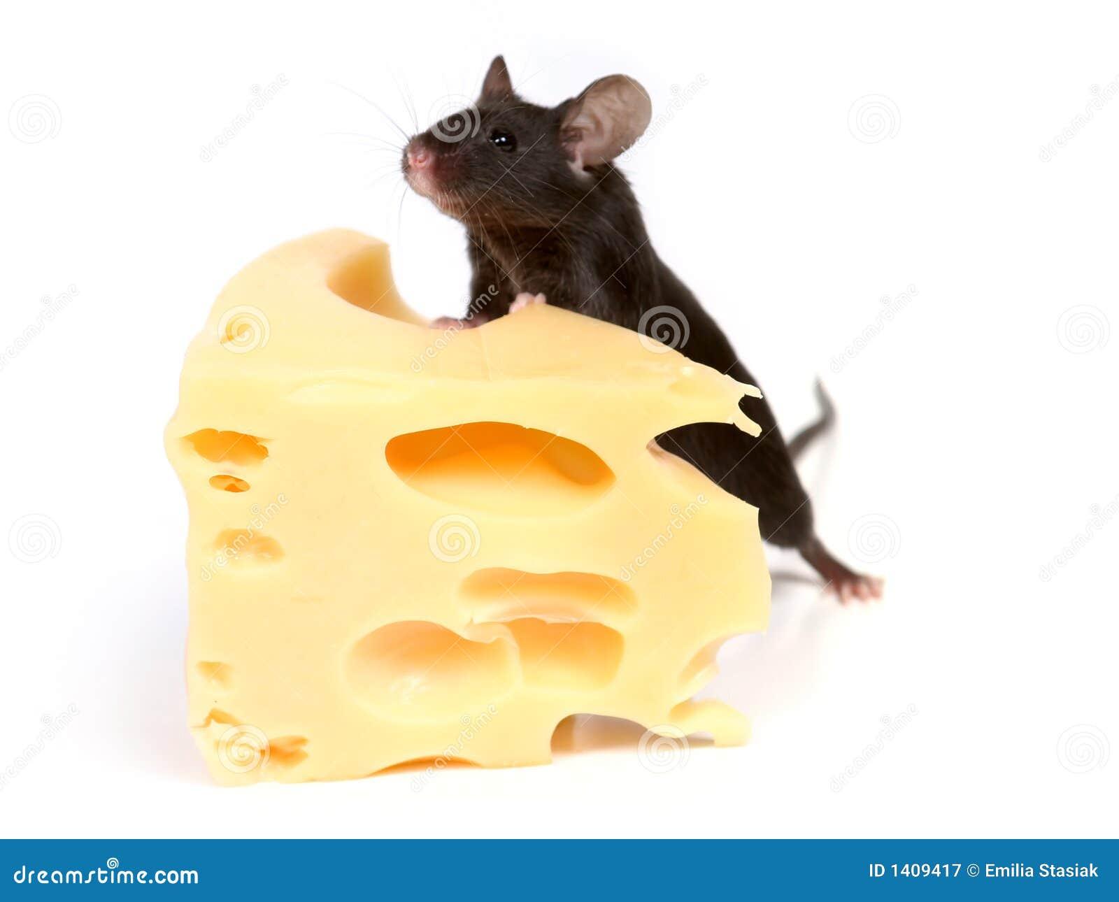 Muis en kaas