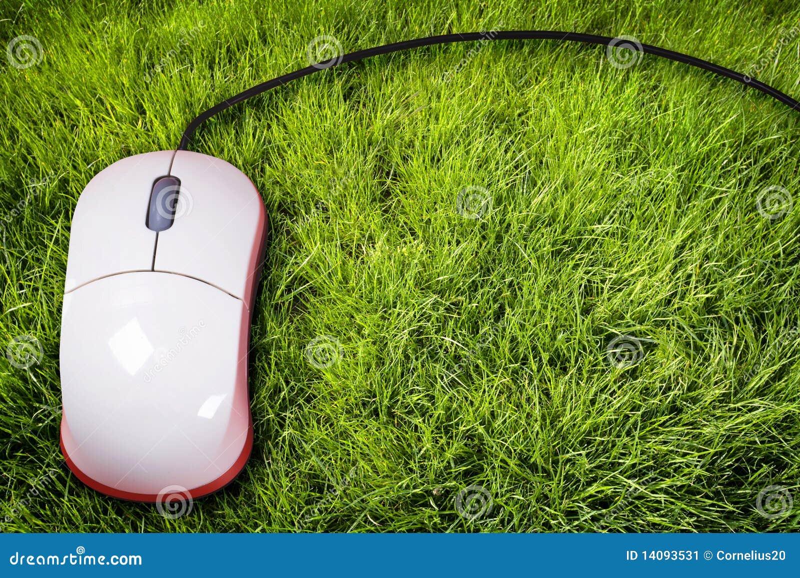 Muis op gras