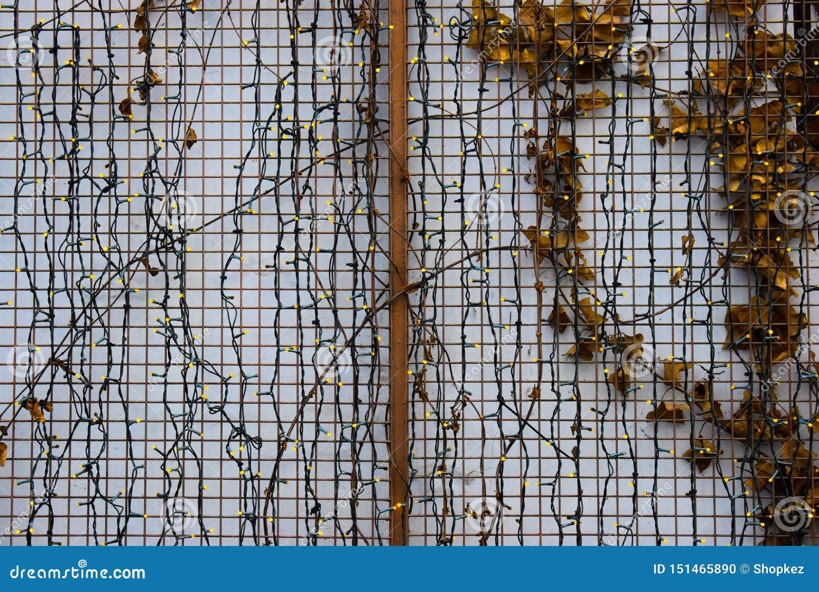 Muitas luzes conduzidas pequenas na parede branca com cerca e folhas do ferro Pouco fundo conduzido das luzes