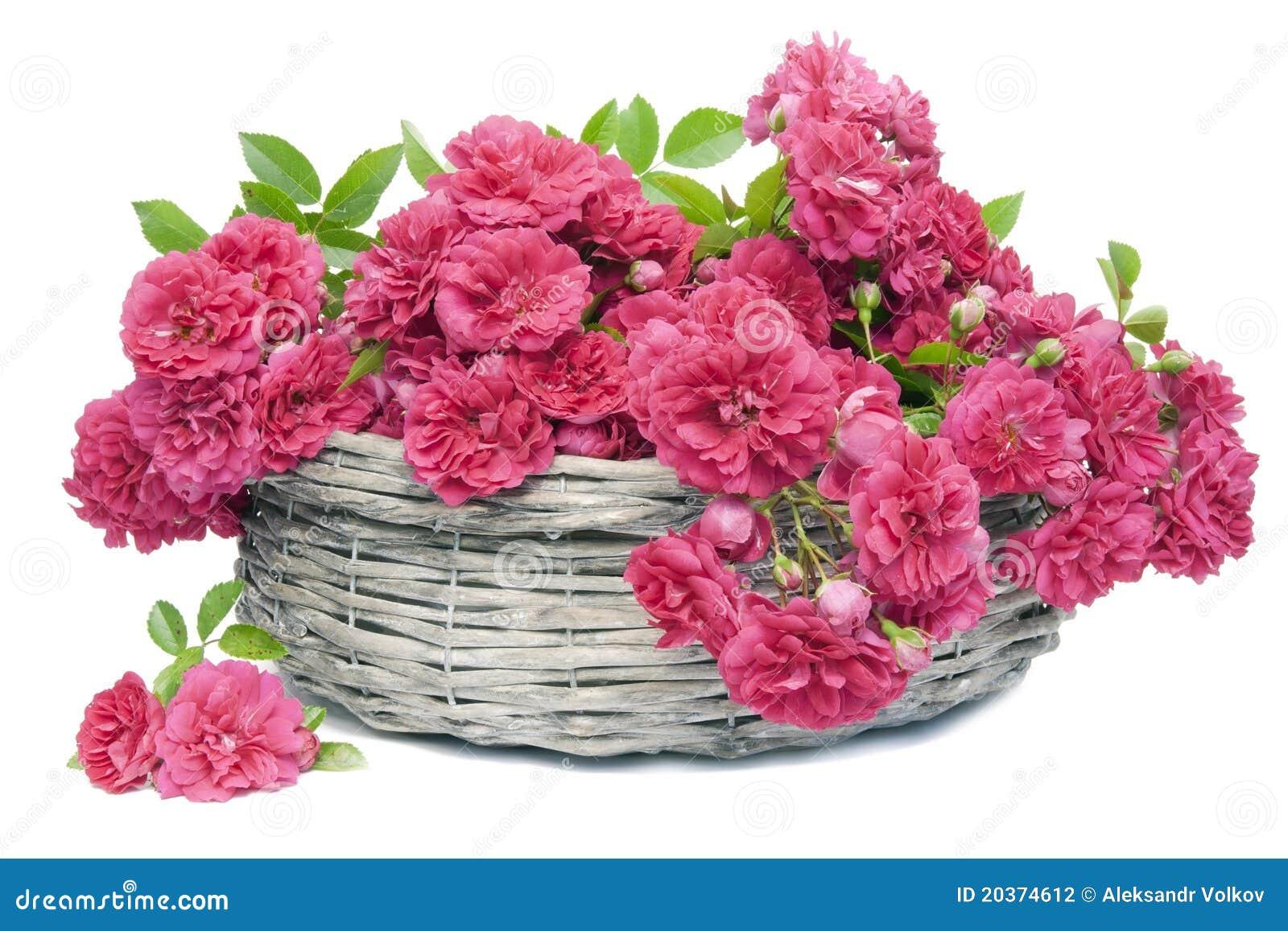 Muitas Rosas Corderosa Na Cesta Fotografia de Stock  Imagem