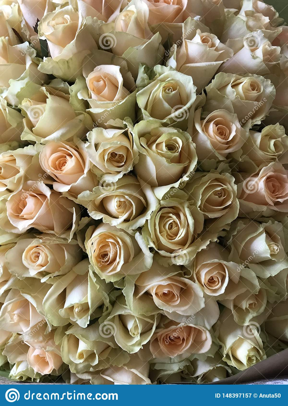 Muitas rosas