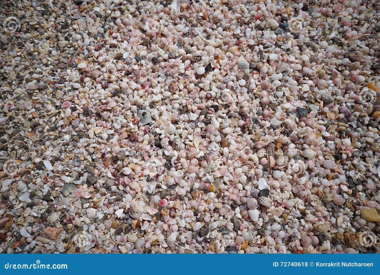 Muitos corais pequenos quebrados, sucata do shell do mar na areia em prachuapkhirikhan, Tailândia