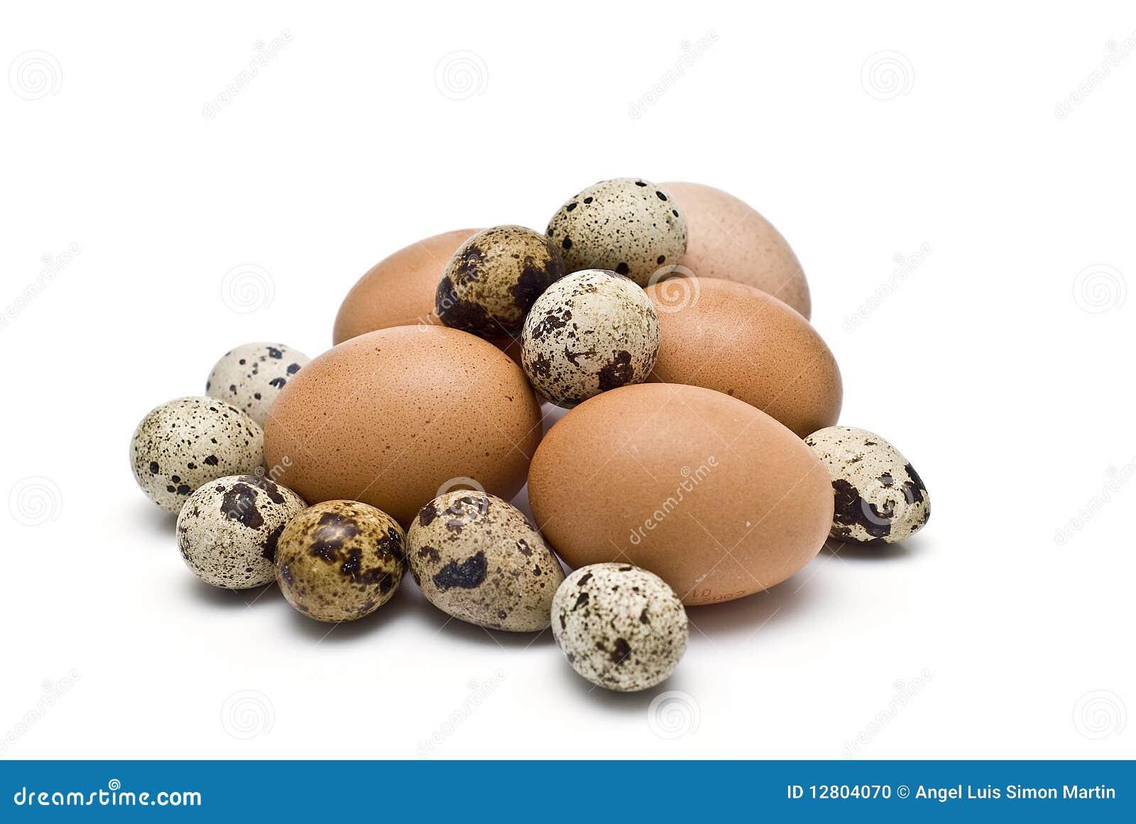 Muitos egss das codorniz e da galinha.