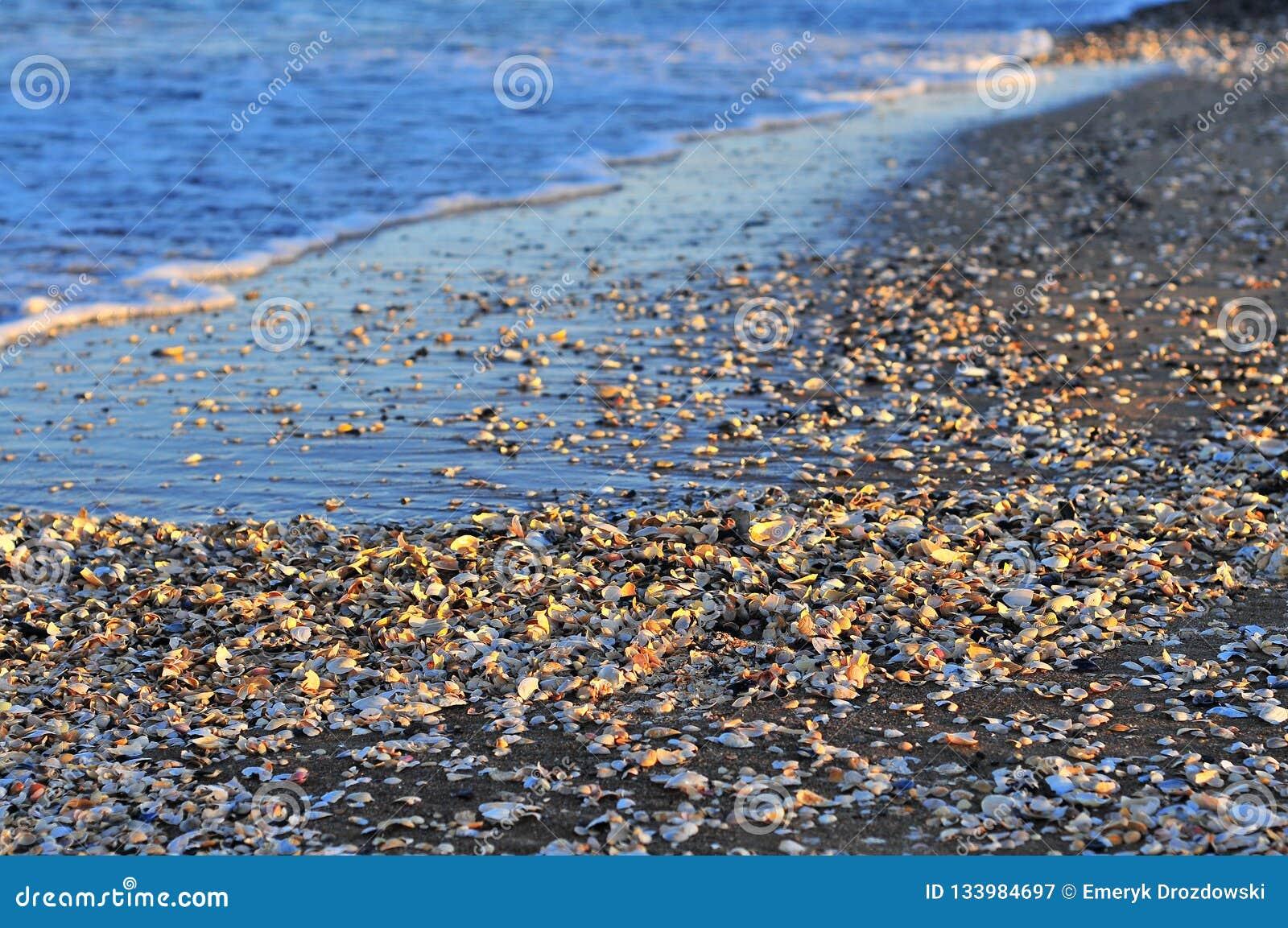 Muitos escudos na praia com ondas