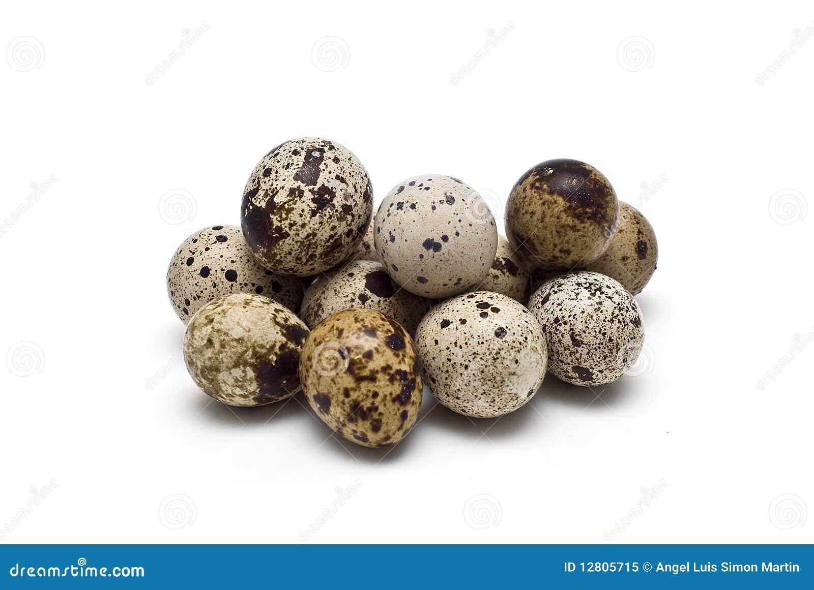 Muitos ovos frescos das codorniz.
