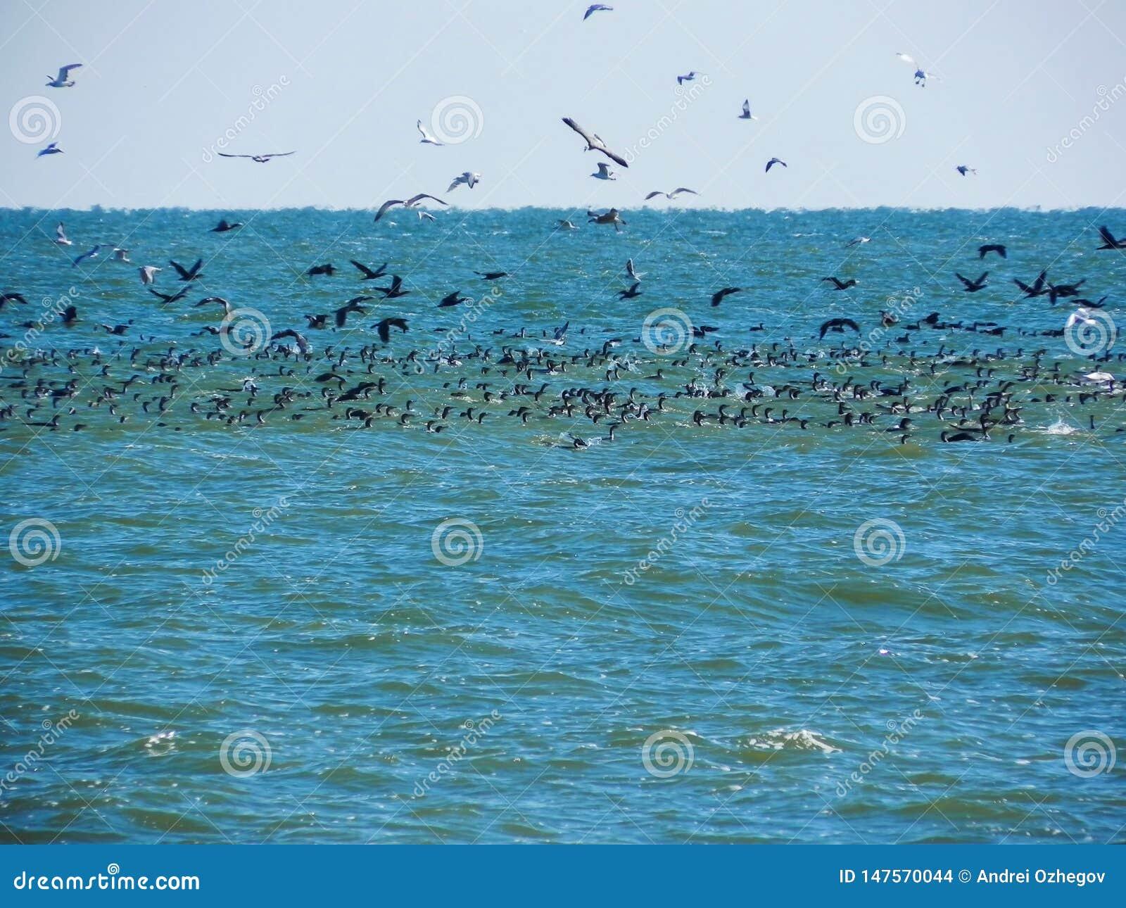 Muitos pássaros travam peixes