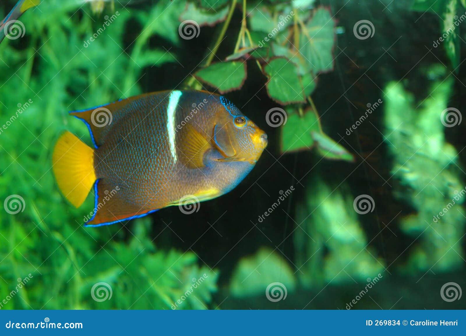 Muitos peixes 2 das cores