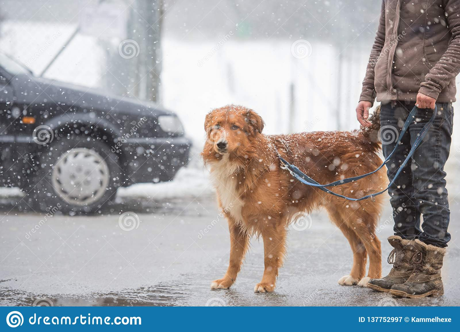 Mujer con el paseo del perro en invierno en el camino
