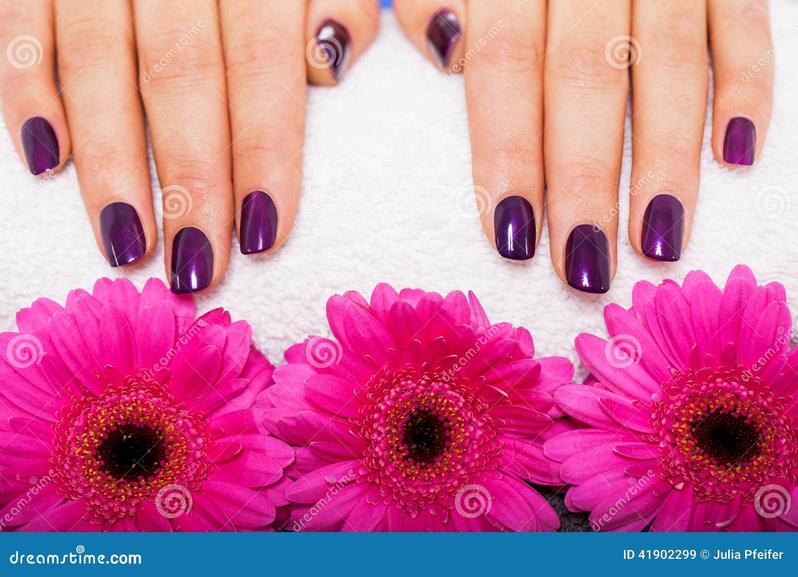 Mujer con los clavos púrpuras manicured hermosos