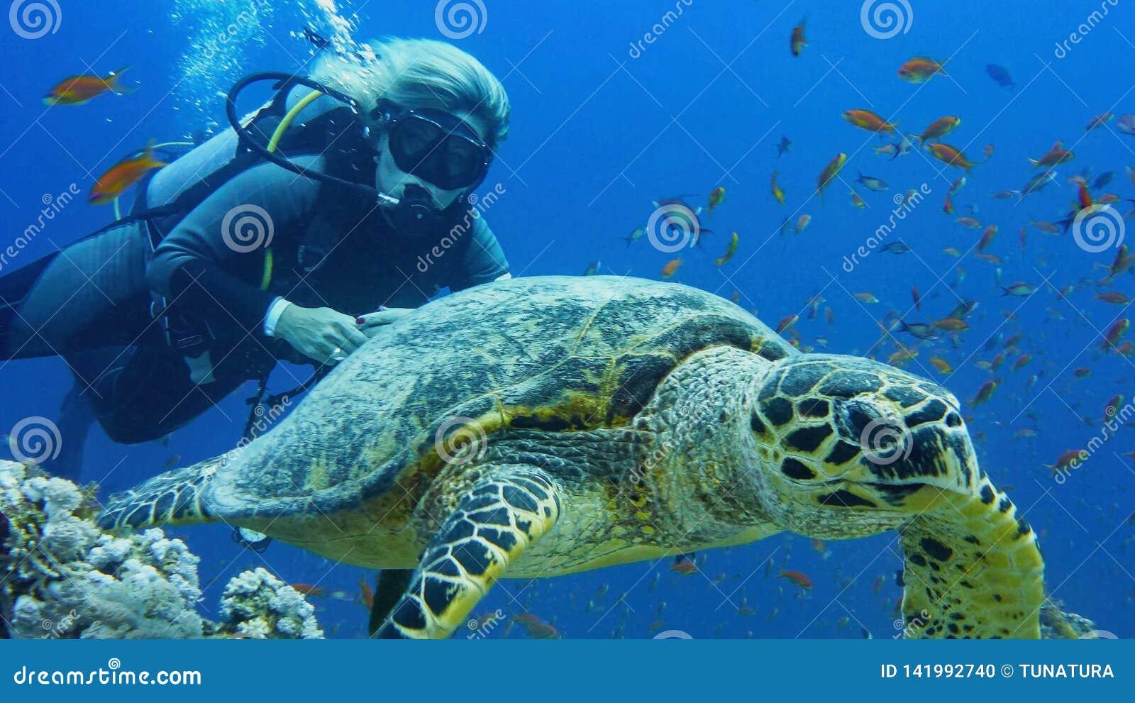 Mujer del buceador con la tortuga de mar
