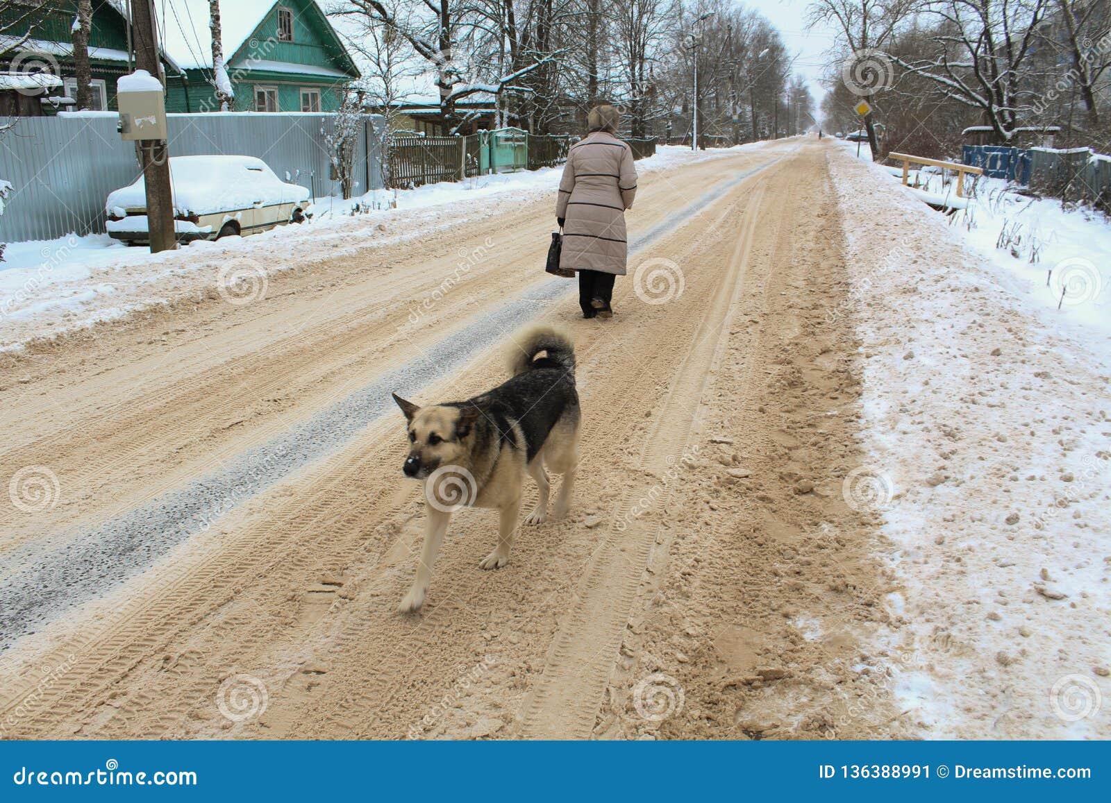 Mujer del camino del perro del invierno