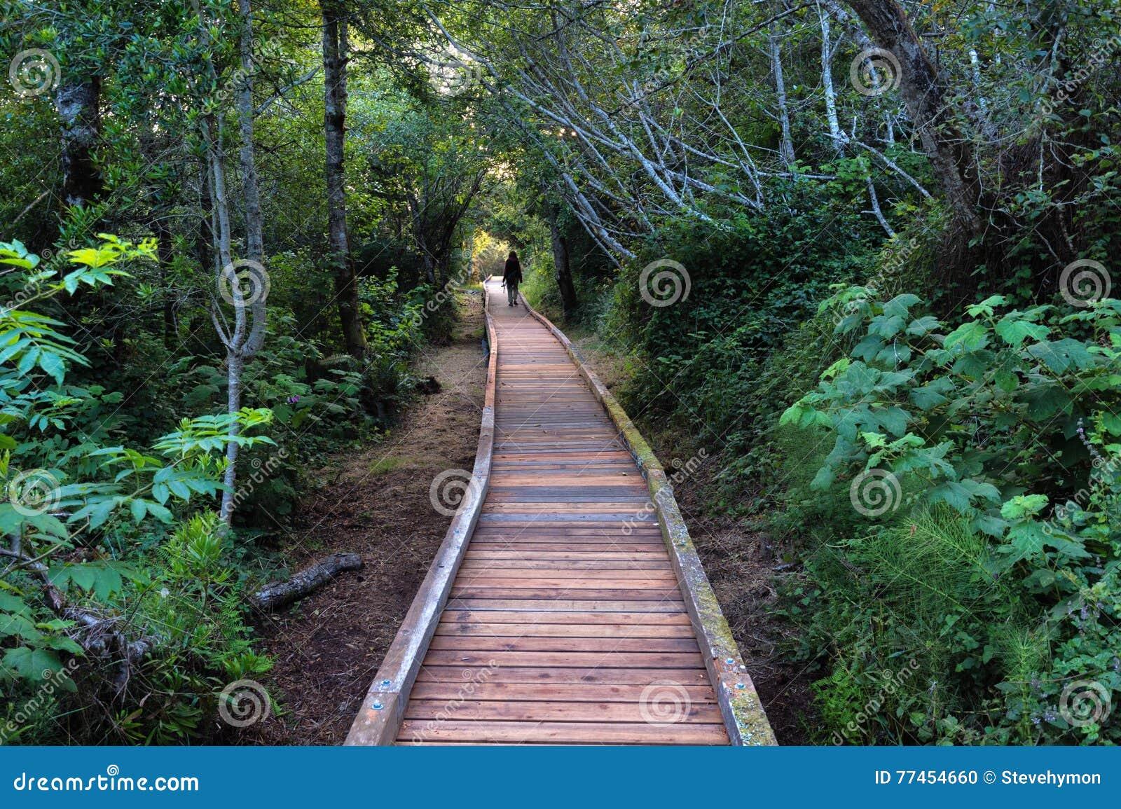 Mujer en paseo marítimo en bosque grueso