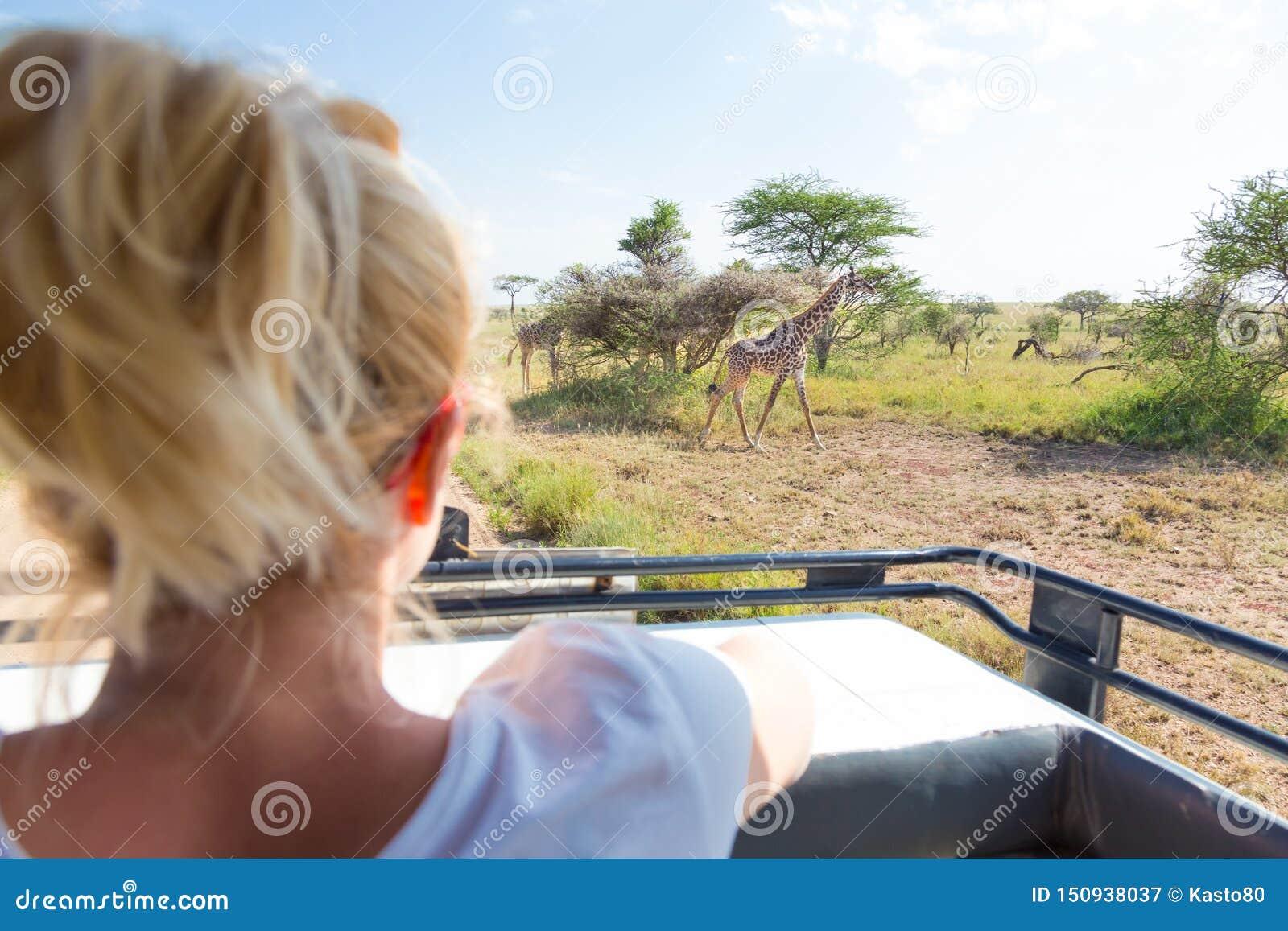 Mujer en safari africano de la fauna observando la jirafa el pastar en la sabana del jeep abierto del safari del tejado