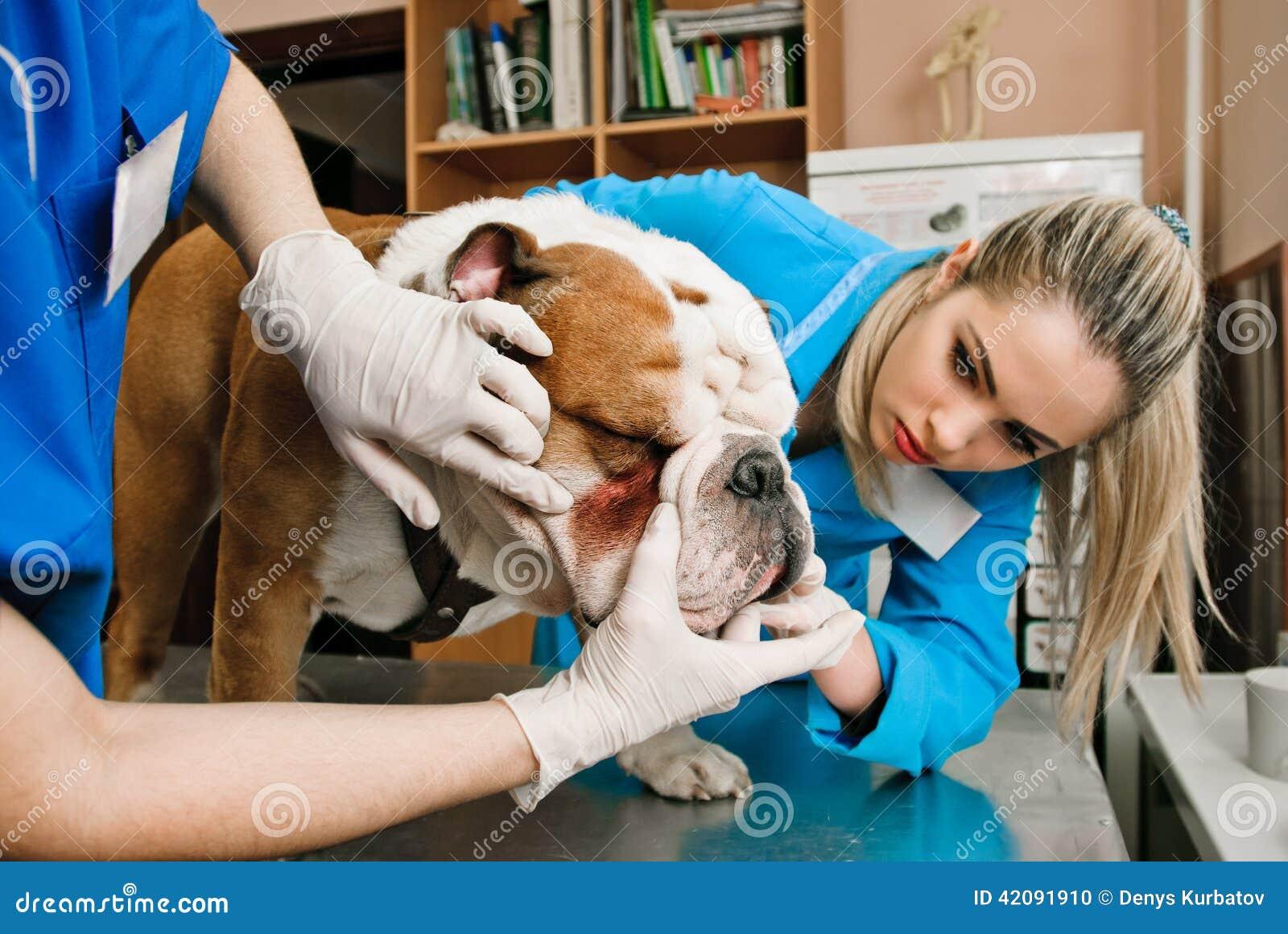 Mujeres de los veterinarios