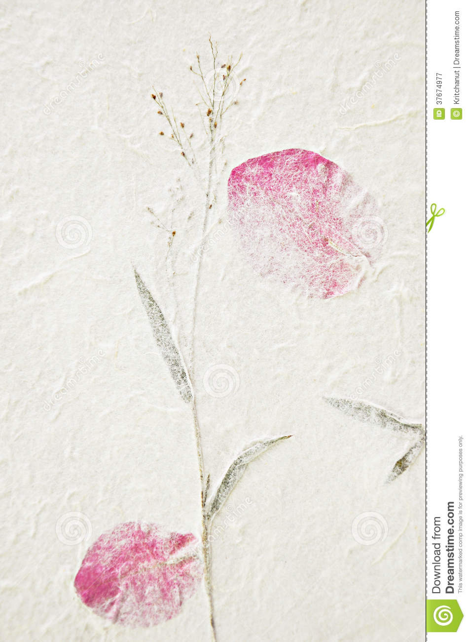 Mulberry Paper Texture With Dried Flower Stock Image ...