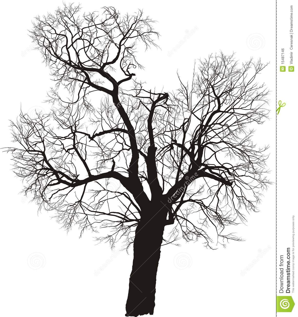 Mulberry Tree, Vector Royalty Free Stock Image - Image: 15487146