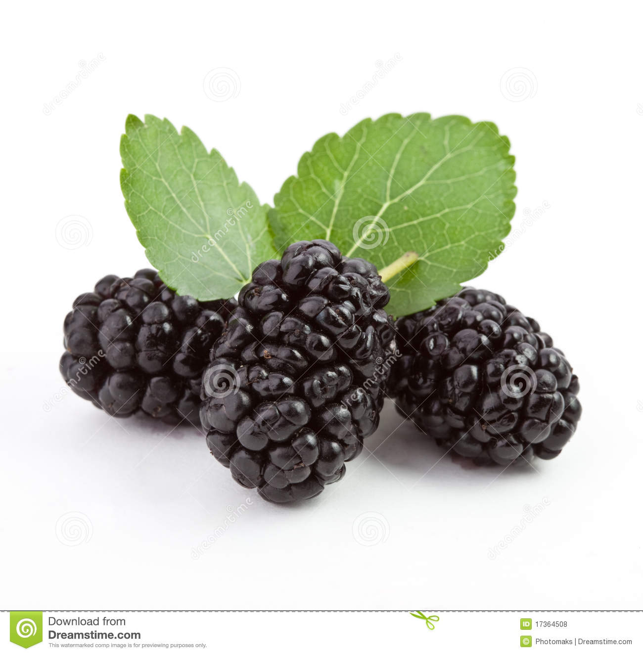 mulberry on a white background stock photo image 17364508 strawberry clip art black and white raspberry clip art transparent background