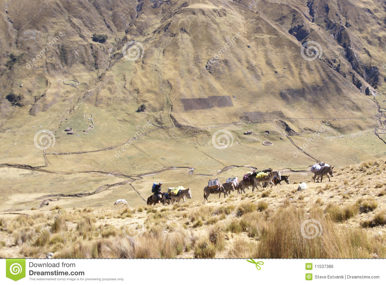 Mule Train, Carrying Loads In High Mountains Royalty Free ...