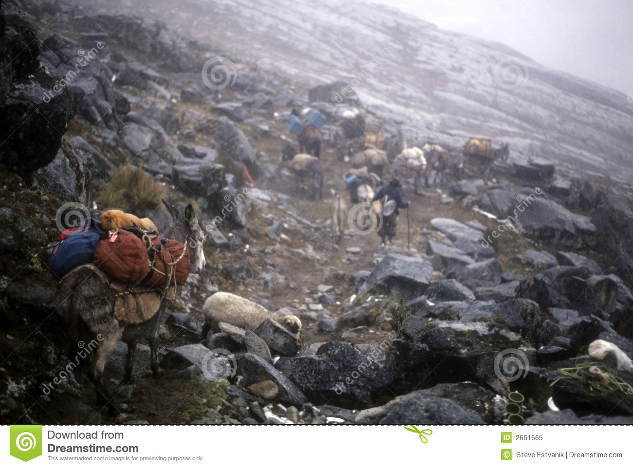 Mule Train Crossing Andes Pass Royalty Free Stock Photo ...