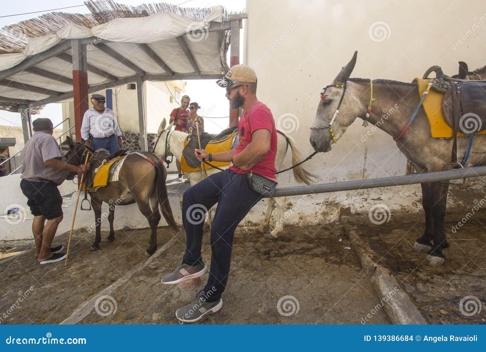 Mules and conductors in Fira Santorini, Greece