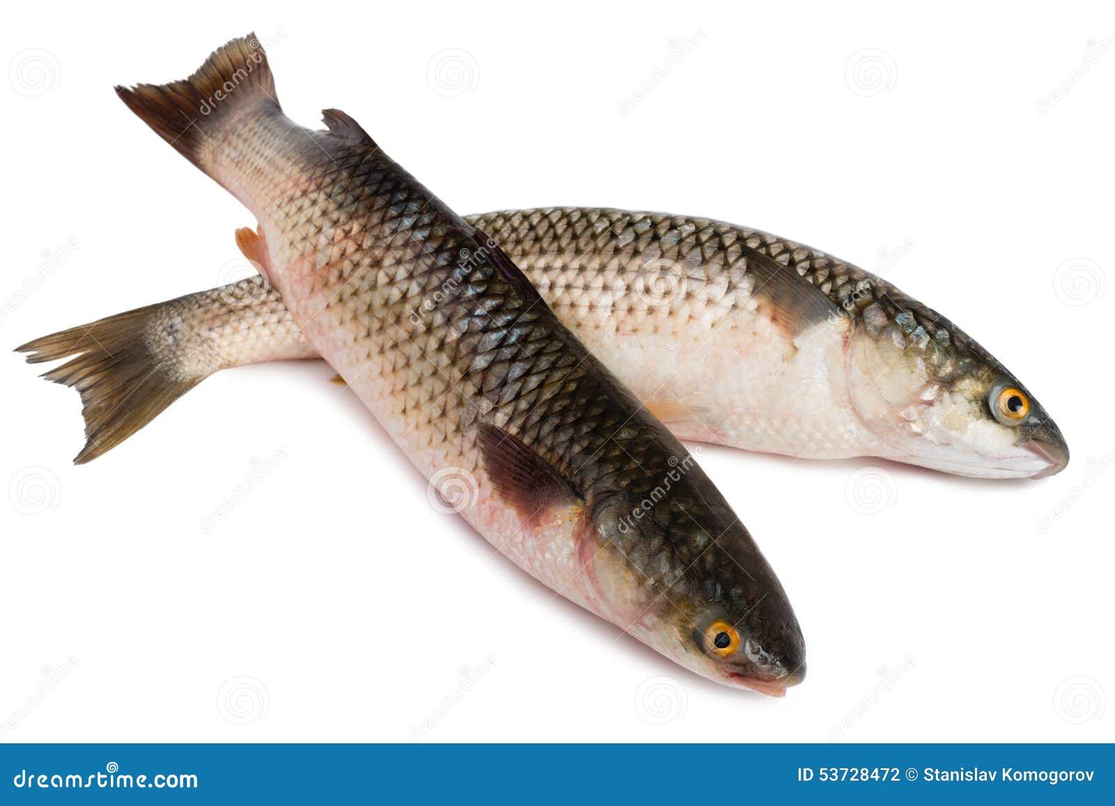 Info poisson de mer - Grand poisson de mer ...