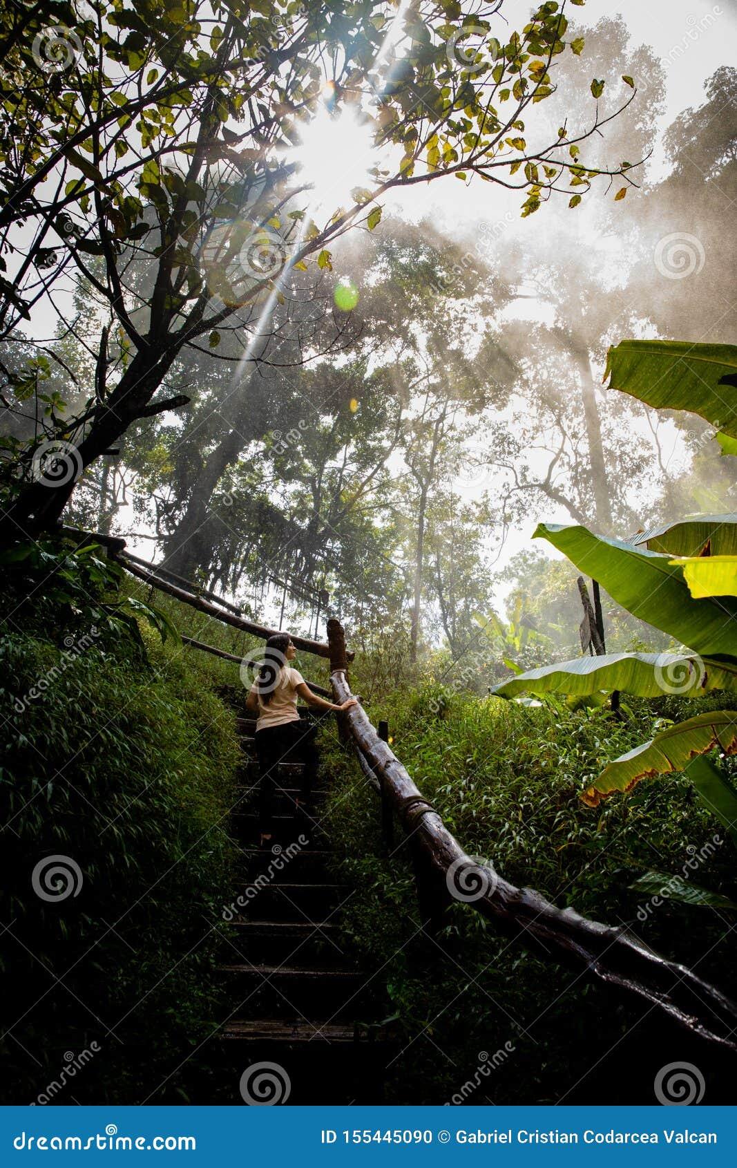 Mulher bonita em escadas em um trajeto nevoento e molhado da floresta úmida em Chiang Mai & em x28; Tailândia
