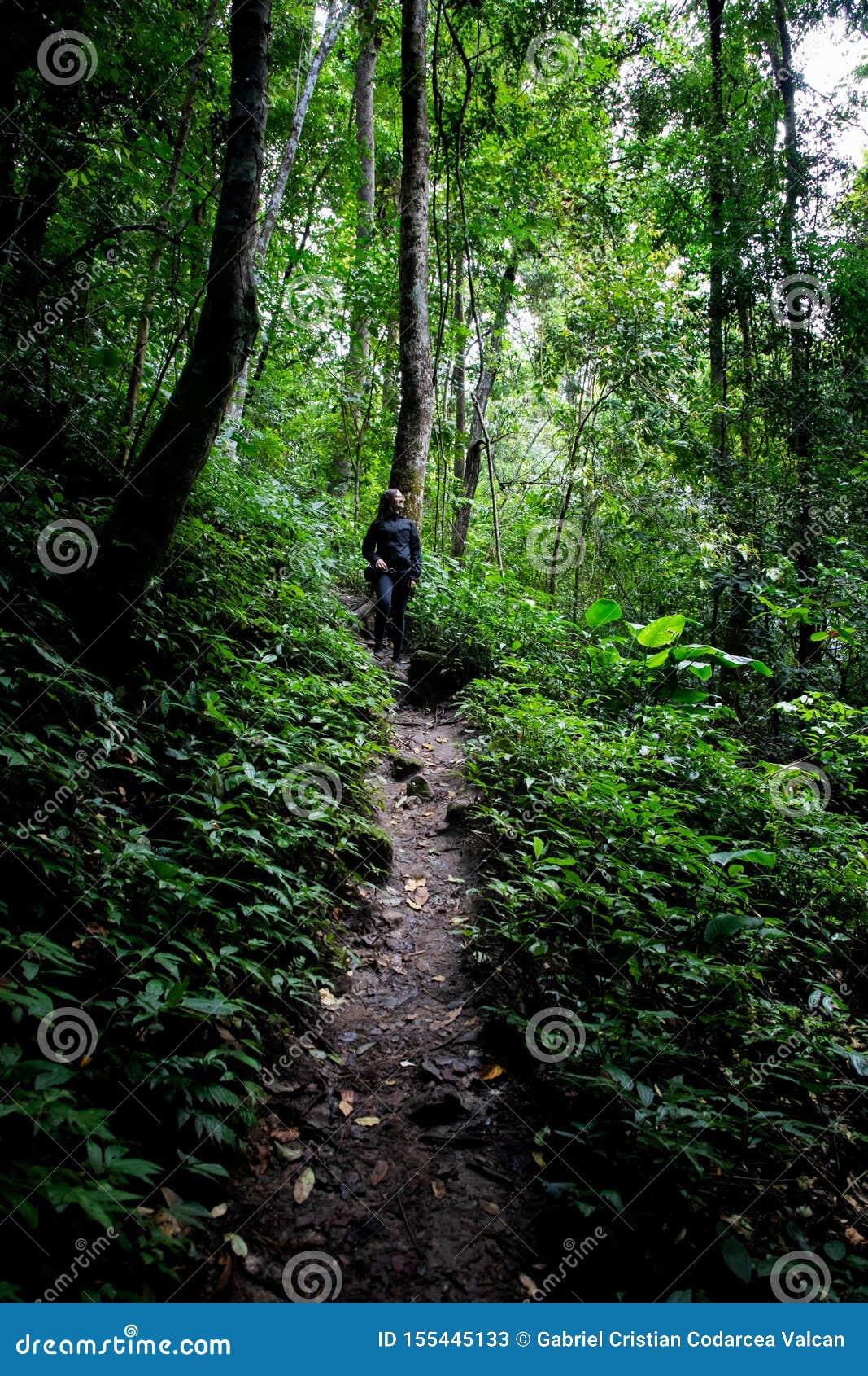 Mulher bonita que caminha no trajeto em uma floresta úmida em Chiang Mai & em x28; Tailândia