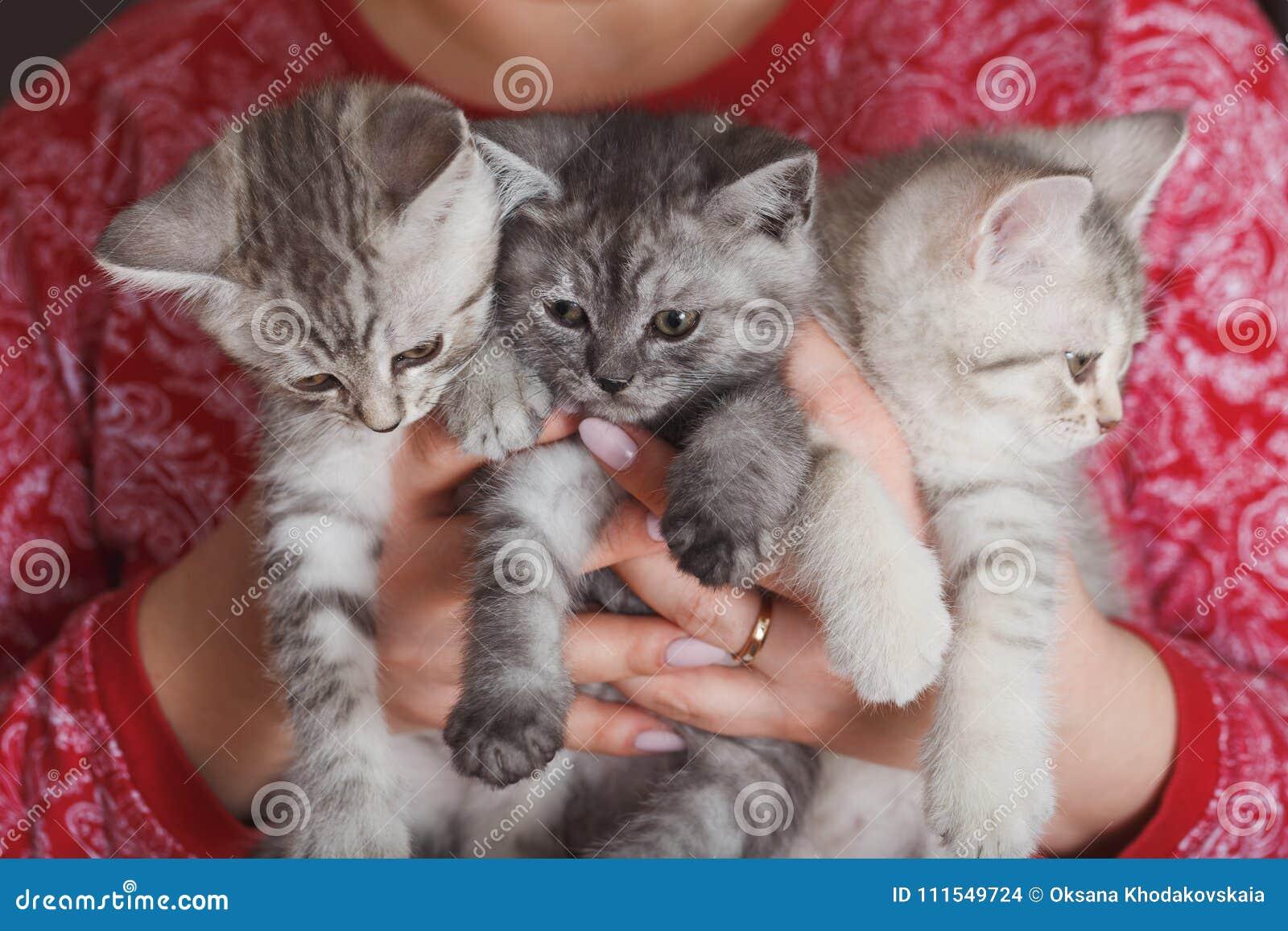 Mulher em um revestimento vermelho que guarda o gatinho três cinzento peludo pequeno