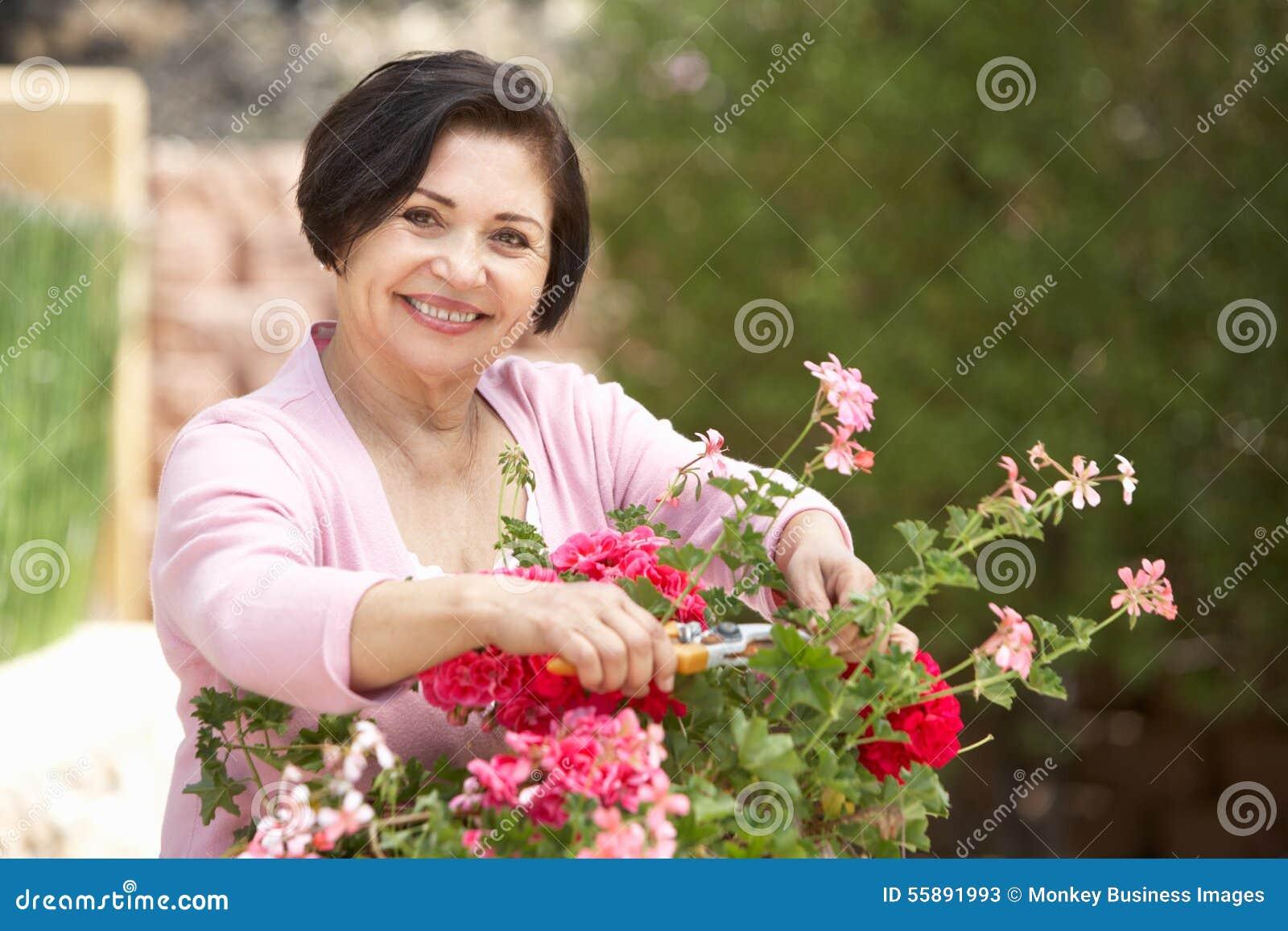 Mulher latino-americano superior que trabalha no jardim que arruma potenciômetros