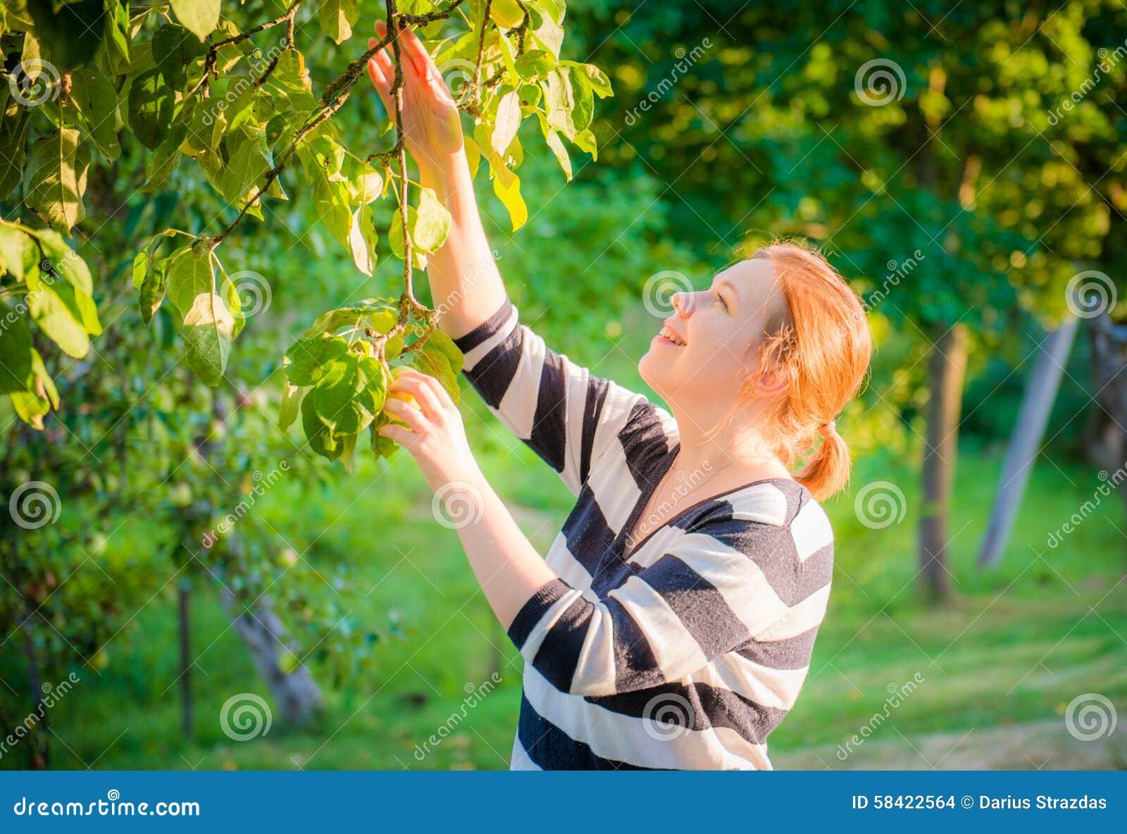 Mulher  maçãs da colheita