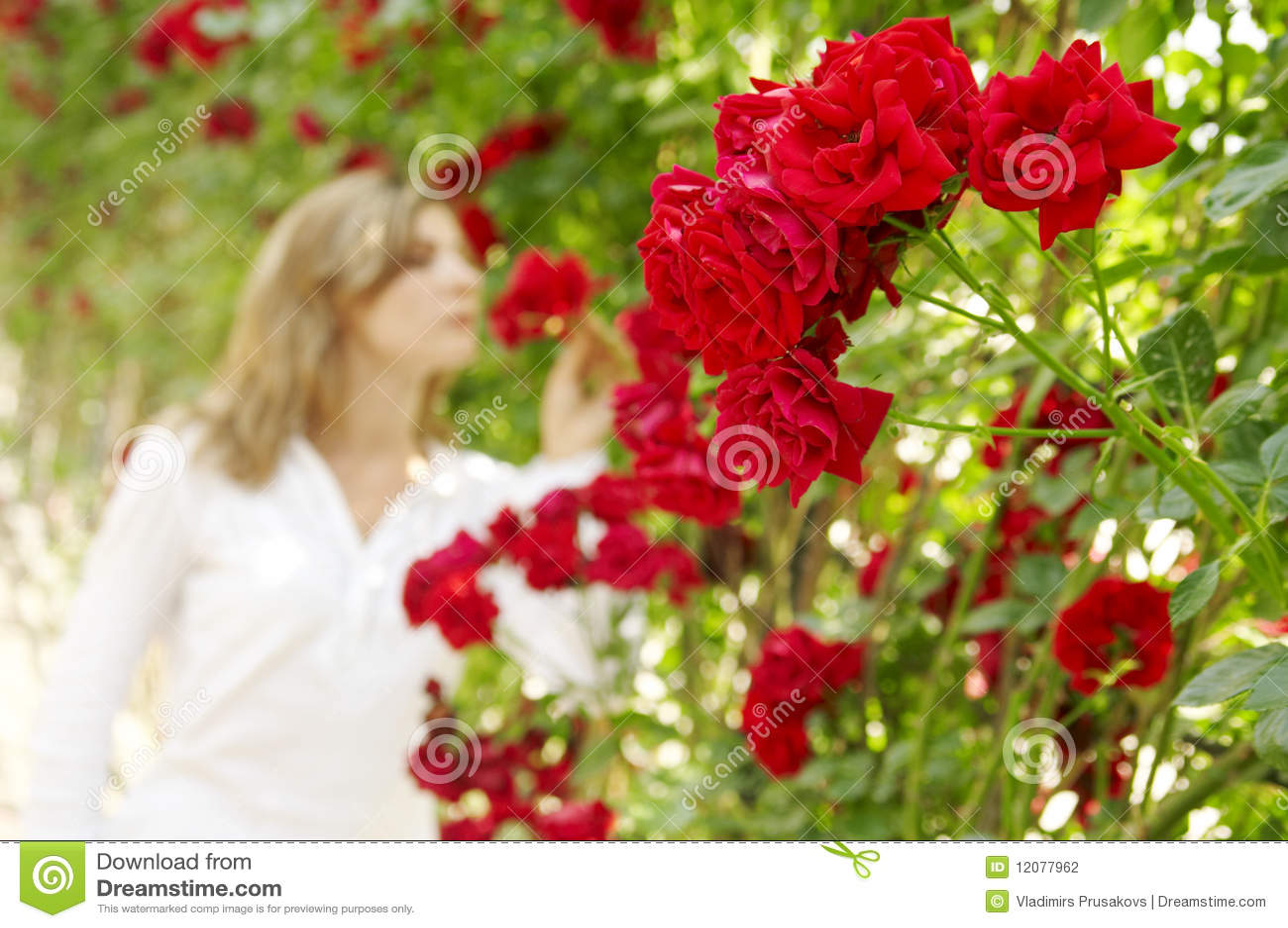 Mulher No Jardim Das Rosas Fotografia de Stock  Imagem 12077962